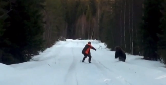 Video: Swedish Man Avoids Bear Attack by Standing His Ground
