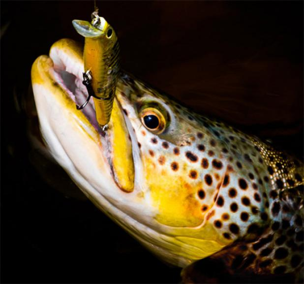Spring Fishing: A Trolling Tactic That Works for Almost Every Species