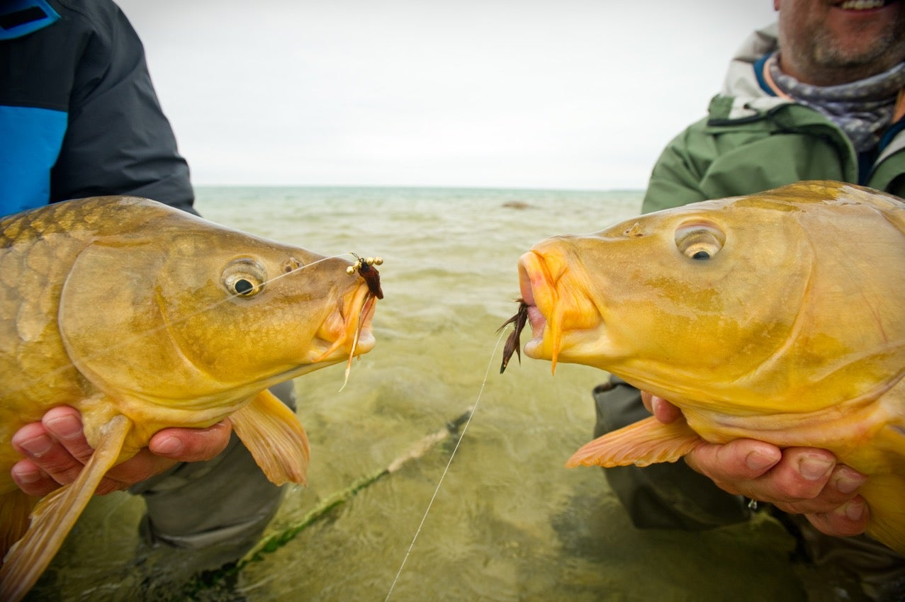 Australia Attempts to Eradicate Carp Using a Form of the Herpes Virus