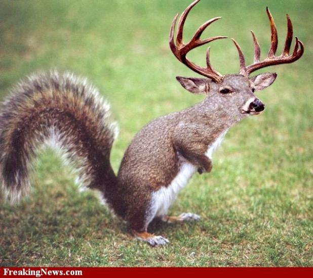 httpswww.fieldandstream.comsitesfieldandstream.comfilesimport2014importBlogPostembedWT_Squirrel-Deer.jpg