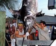 683 lb. Keys Swordfish Won't Qualify for Record