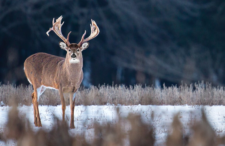 Superbucks: Five Legendary Deer and How to Tag Them