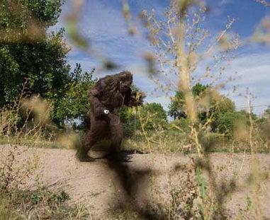 httpswww.fieldandstream.comsitesfieldandstream.comfilesimport2014importImage2009photo23harry_01.jpg