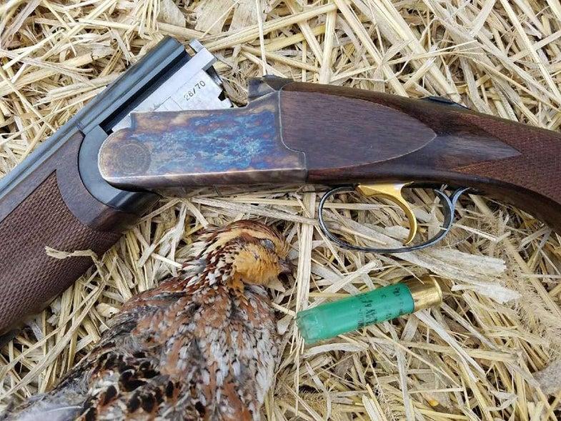 quail hunting with 28 gauge and franchi shotgun