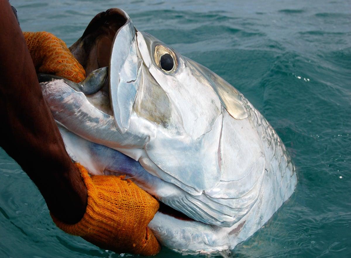 tarpon, best tarpon fishing, great tarpon fishing, kirk deeter,