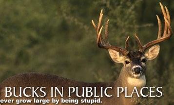 Big Bucks in Public Places