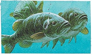 Catch More Big Summer Bass