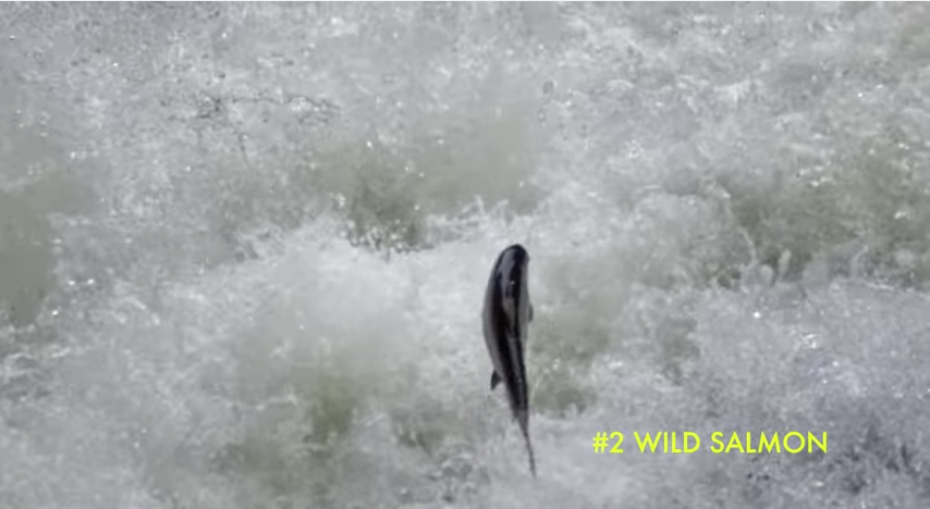 Video: Top 50 Favorite Things About Northwest Rivers