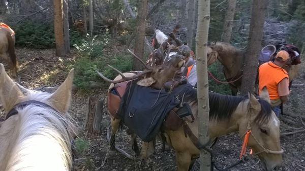 Elk Heist: Utah Hunters Lost Trophies to Thieves in the Woods