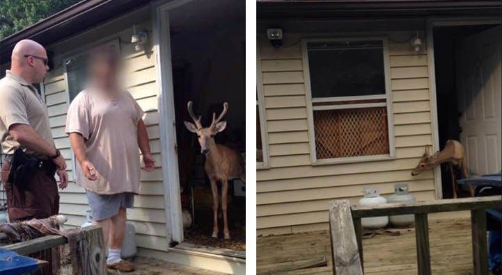 West Virginia Man Kept Two Deer Captive in His House for a Year