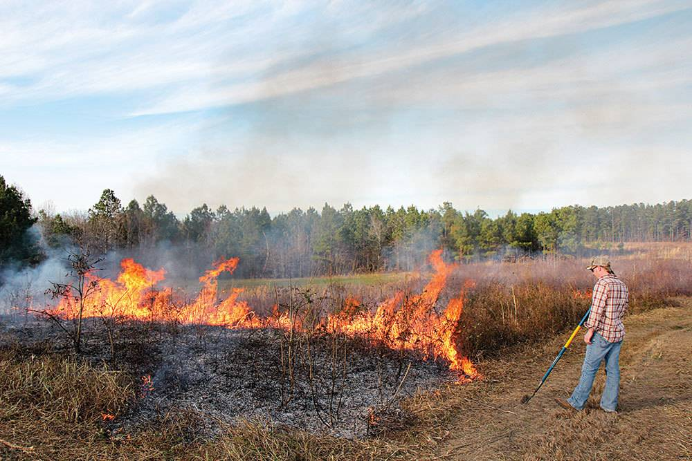 controlled fire burning for turkey hunting