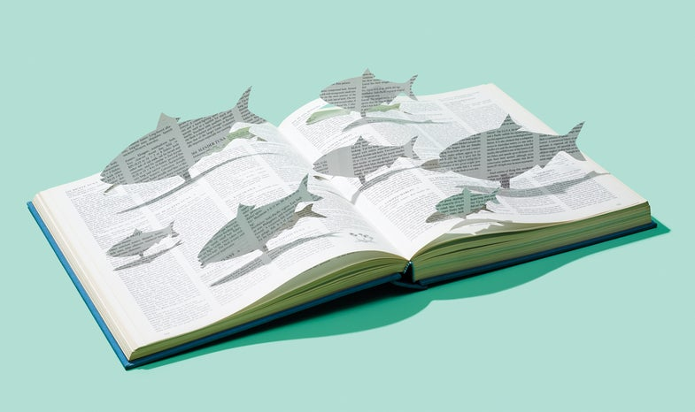 Reading Shad: Score Fall Bass by Studying Their Prey
