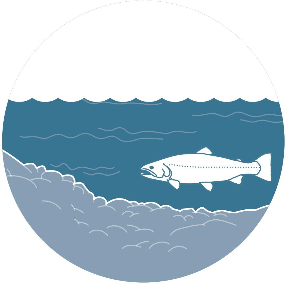 Trout fishing slow lane