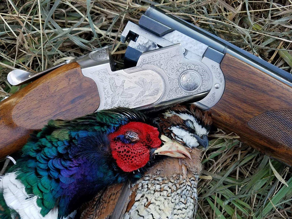 beretta silver pigeon iii with a pheasant and quail