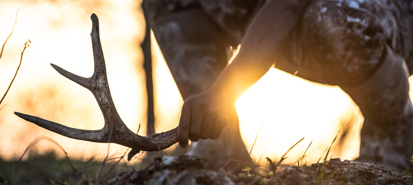 how to find shed antlers