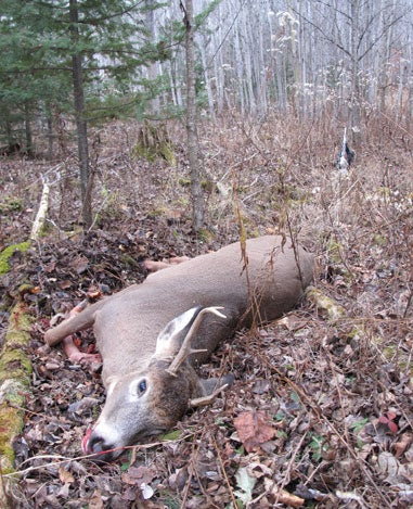 Drummond Island Deer