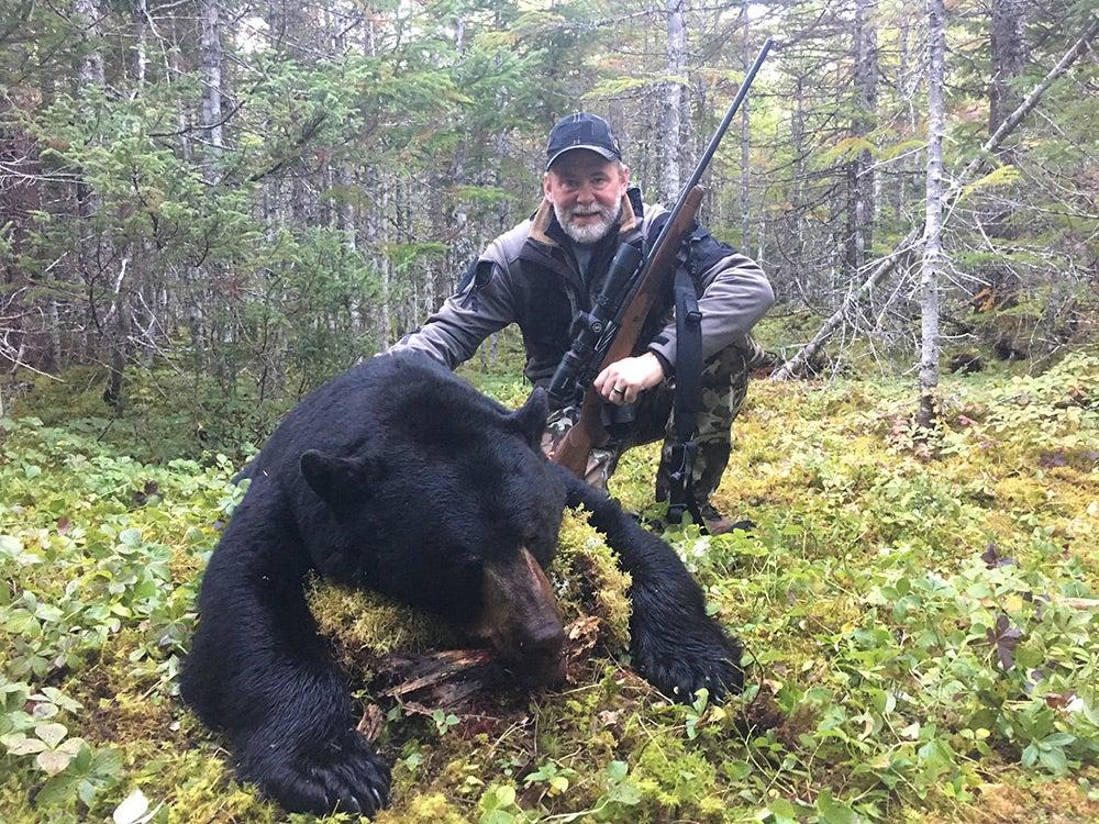 355-pound Newfoundland black bear