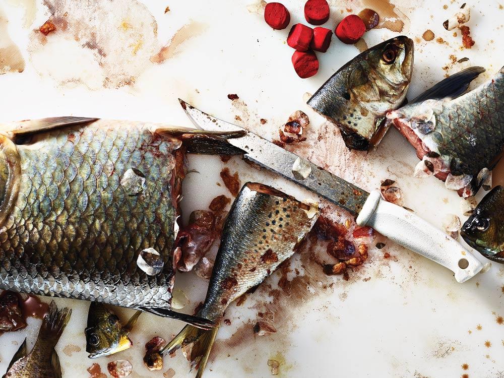 4 killer cut-bait fishing rigs