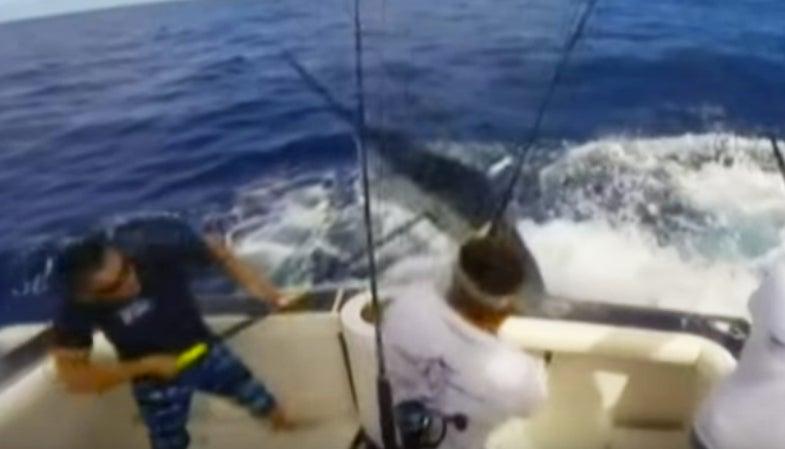 Video: Marlin Nearly Impales Australian Angler