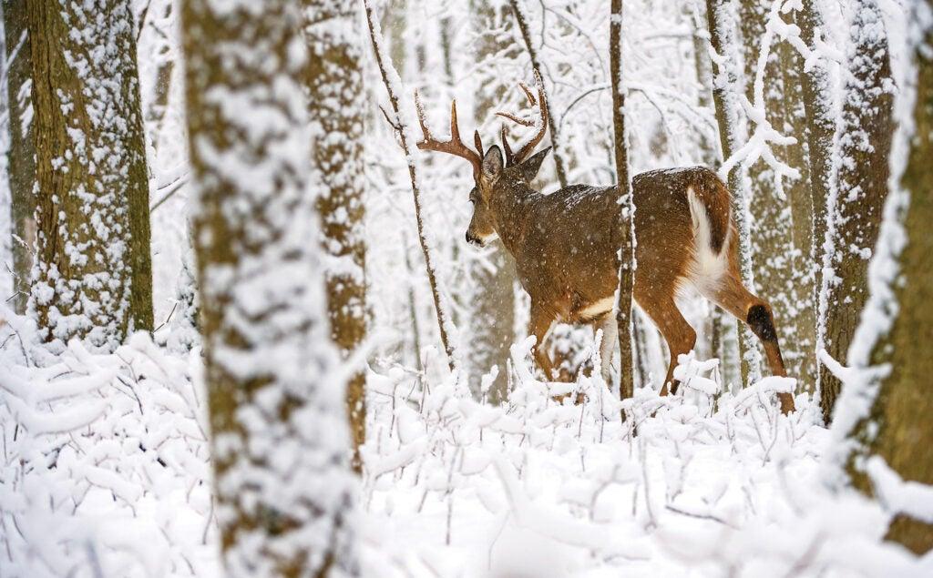 late season deer tactic