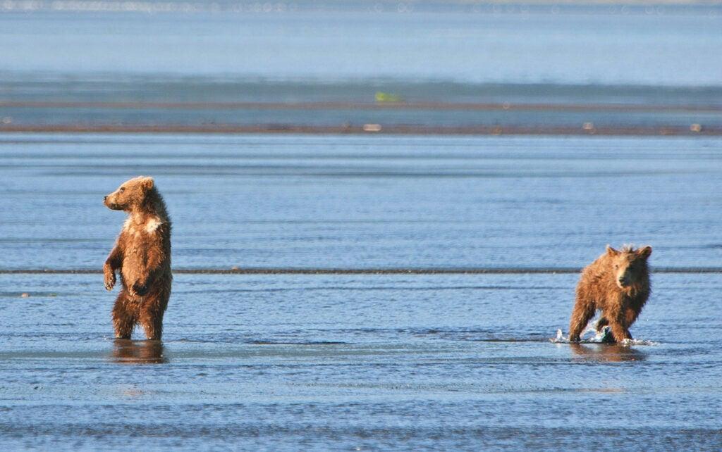 httpswww.fieldandstream.comsitesfieldandstream.comfilesimport2014importImage2011photo38356BARM_BearWars_Alaska_EXCL_021_0.jpg