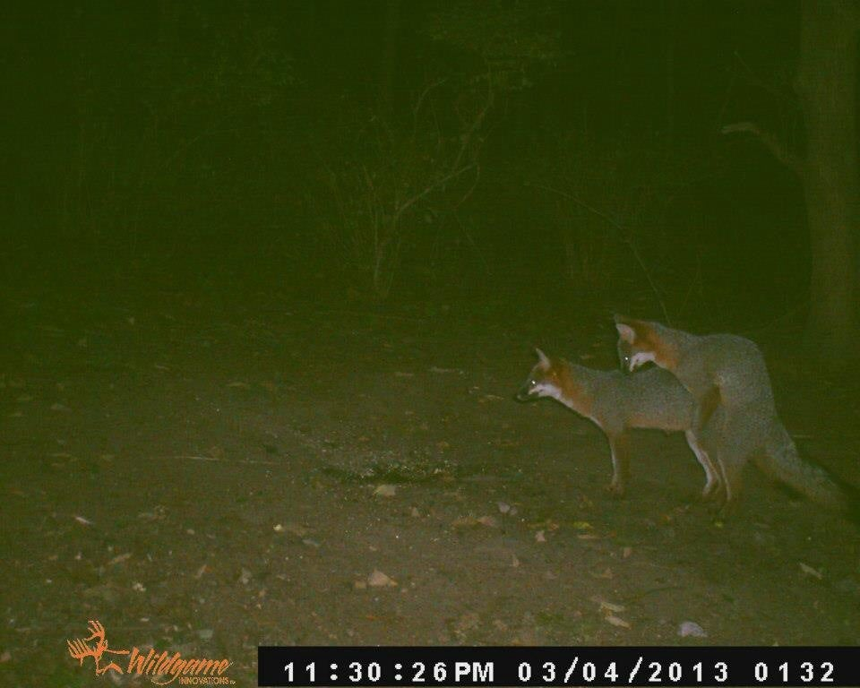 httpswww.fieldandstream.comsitesfieldandstream.comfilesimport2014gallery201411foxes.jpg