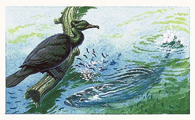 Follow Birds to Fish