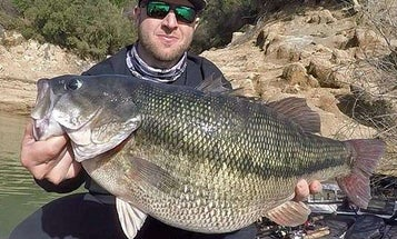 California Fisherman Lands Potential World-Record Spotted Bass