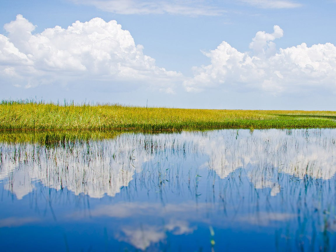 A Catastrophe in the Everglades, and How to Fix It