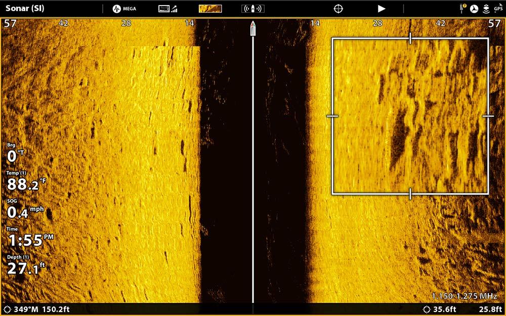 blurry snook image sonar scan