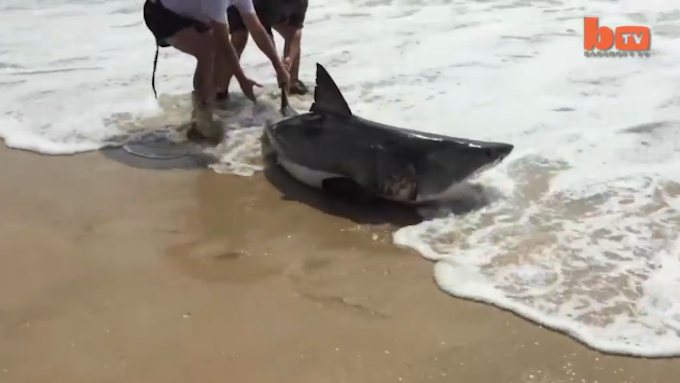 Video: South African Anglers' Surprise Catch Turns Into Great White Shark Rescue