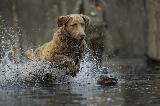 Training and Diet: Strike the Perfect Balance for Your Dog
