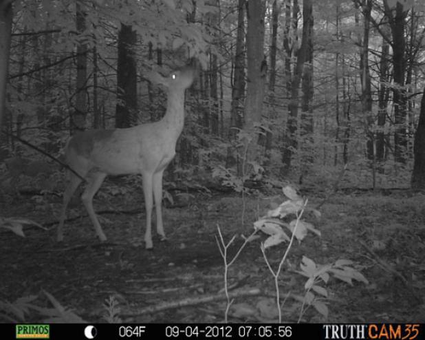 httpswww.fieldandstream.comsitesfieldandstream.comfilesimport2014importBlogPostembedWhitetail_Deer_Moving_More.jpg