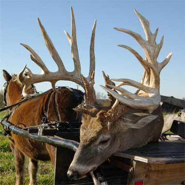 John Schmucker's Deer in the Amish Bucks Photo Gallery
