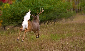 Six Ways to Find That Buck You Spooked