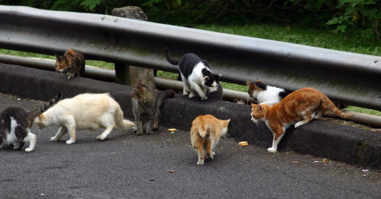 Australia Goes to War with Feral Cats