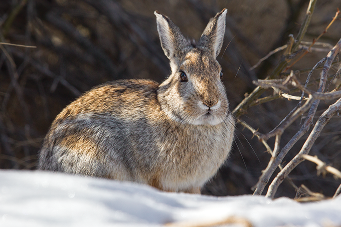 A small rabbit in the snow.