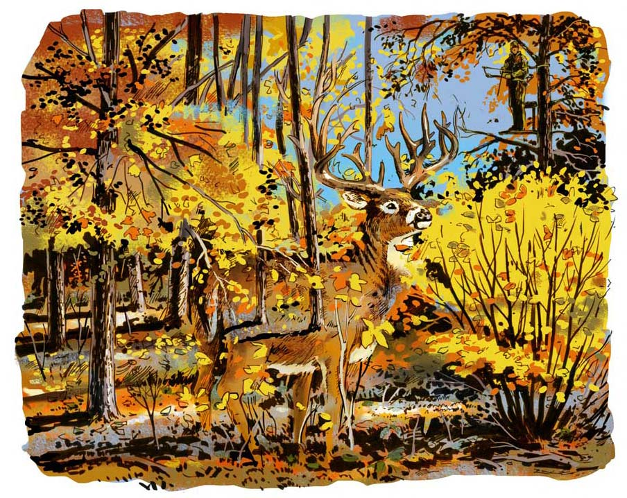 Feature Story: Deer Camp Bucks