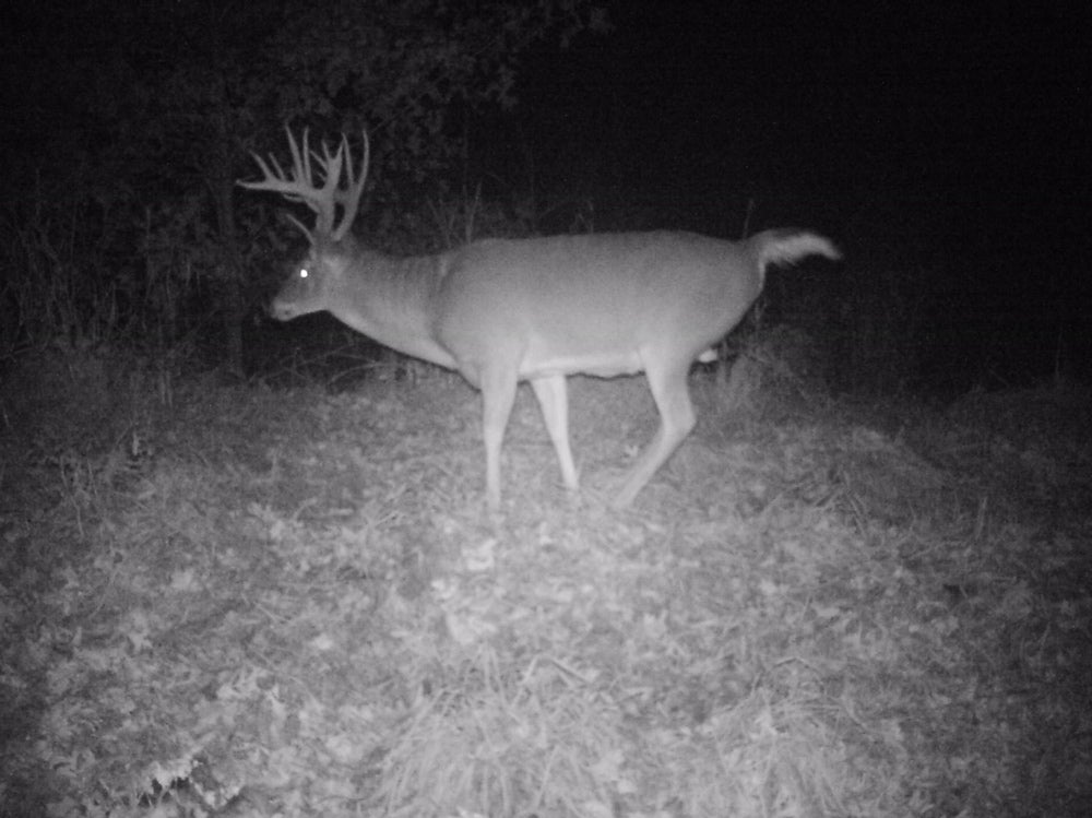 Missouri buck on camera