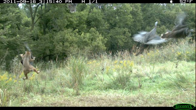 The 50 Best Shots From The 2011 Field & Stream Fall Trail Cam Contest