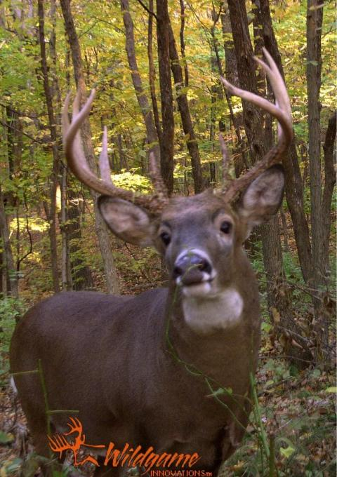 Round 3 Trail Cam Winners: Angling Blue Heron, A Candid Proposal, and a Fluffed Grouse