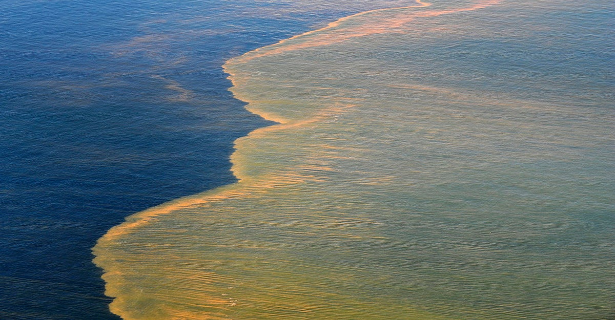 Final Toll of BP Oil Spill: Trillions of Fish