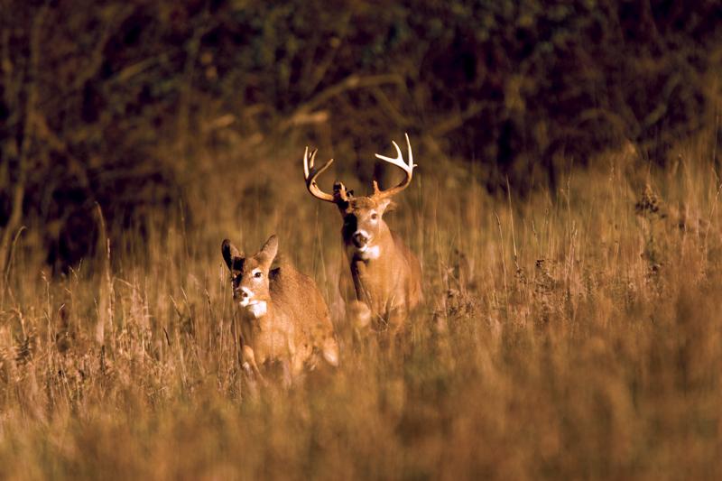 Deer Hunting Tip: Target Bucks in a Pinch Point
