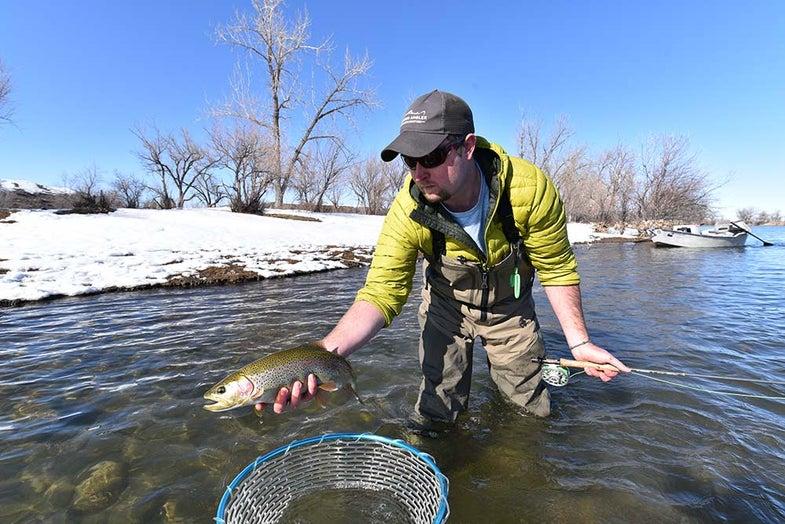 trout fishing bighorn river
