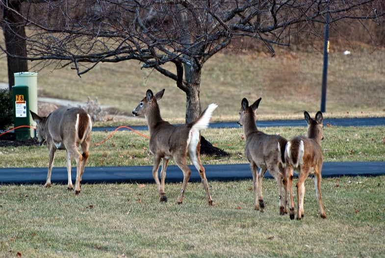 It's November and the Deer Are Moving