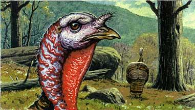 Seven Old-School Turkey-Hunting Tips From Field & Stream