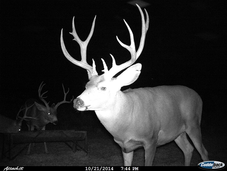 Big Bucks Are Still Largely Nocturnal