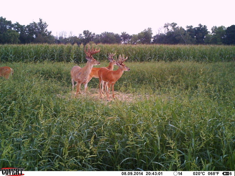 Best Trail Camera Photos of Fall 2014, Round 1