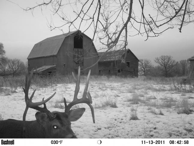 The 50 Best Photos From Round III of the 2011 Field & Stream Fall Trail Cam Contest