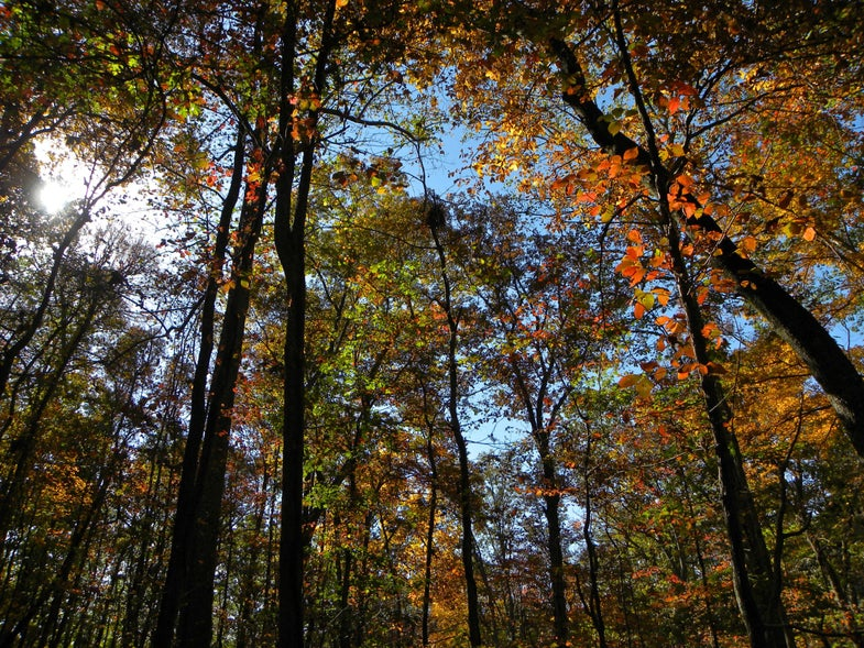 The Woods: Not New, Not Improved, Still Dominant in Its Share of the Market